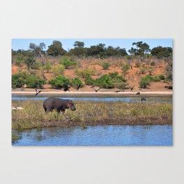 Hippo. Canvas Print