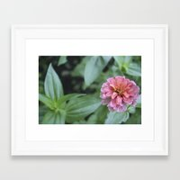 rileigh smirl Framed Art Prints featuring Pink Flower by Rileigh Smirl