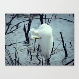 Great Egret in Water A108 Canvas Print
