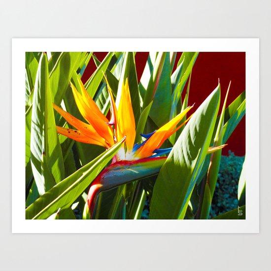 Bird of Paradise III Art Print