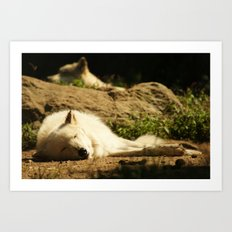 Sleeping white wolf in the summer sun Art Print