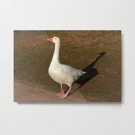 Emden Goose Standing Metal Print