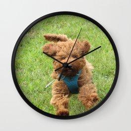 Luna the Labradoodle Wall Clock