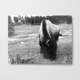 Lost in fur Metal Print