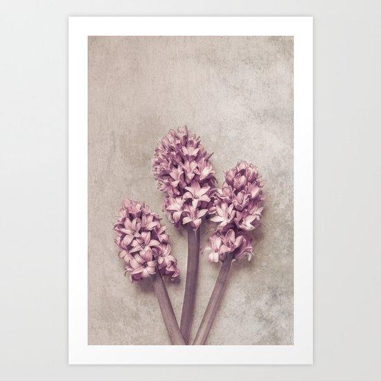 Lovely pink Hyacinths Art Print