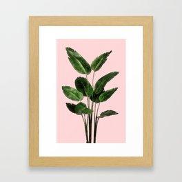 Bird of Paradise Plant on Pink Framed Art Print