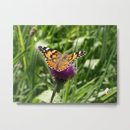 PAINTED LADY BUTTERFLY Vanessa Cardui Metal Print