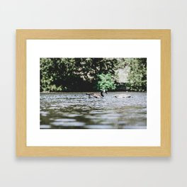 Geese on the Lake Framed Art Print