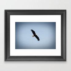 Bald Eagle in Flight Color Photo Framed Art Print