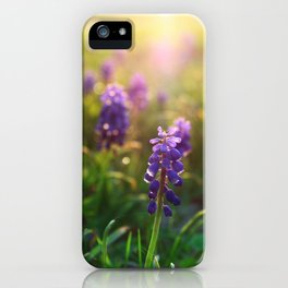 Grape Hyacinths (Muscari) iPhone Case