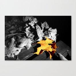 Autumn Pop of Color Canvas Print
