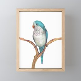 Blue quaker parrot watercolor Framed Mini Art Print