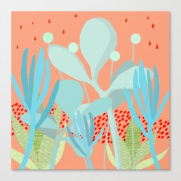Succulents in the sunshine Canvas Print