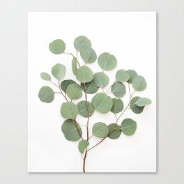 Eucalyptus Branch Canvas Print