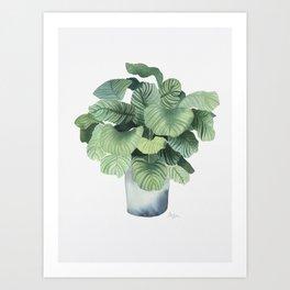 Urban Jungle - Plant Art Print