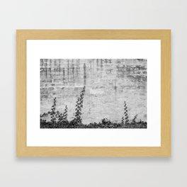 Growing ivy Framed Art Print