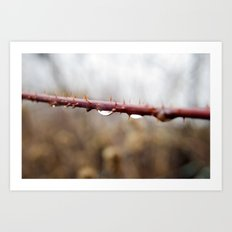 Thorns and Water Art Print