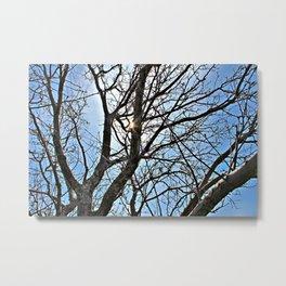 Trees & Sunshine Metal Print