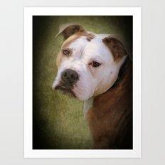 Hunde Augen Art Print