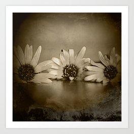 Old flower dream  Art Print