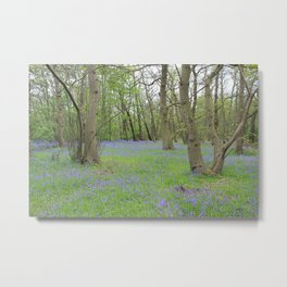 Bluebell Heaven Metal Print