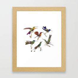 Six Colorful Hummingbirds Framed Art Print