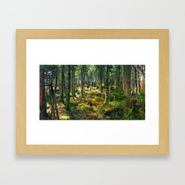 Late Spring Forest Framed Art Print