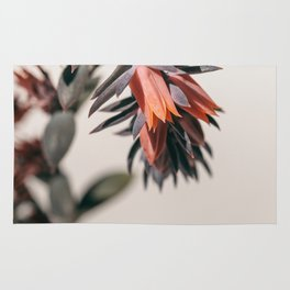 Summer Succulent #2 Rug
