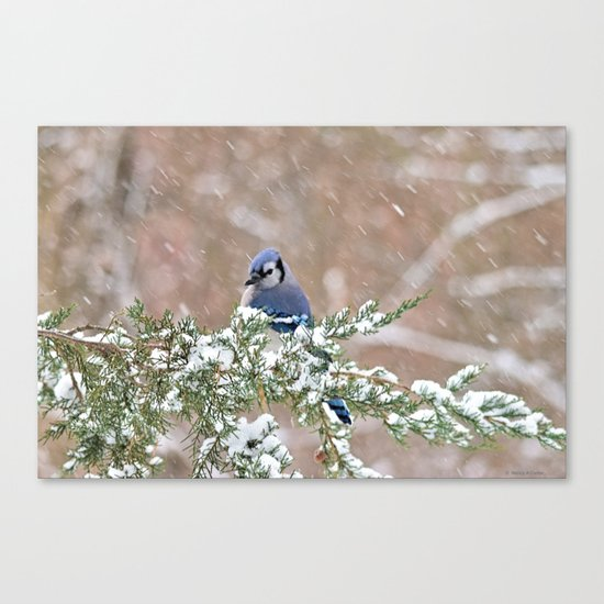 Winter Has Arrived (Blue Jay) Canvas Print
