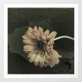 Crackled Gerbera Daisy Art Print