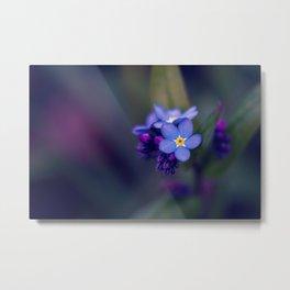 Forget-Me-Not Myosotis Flower Metal Print