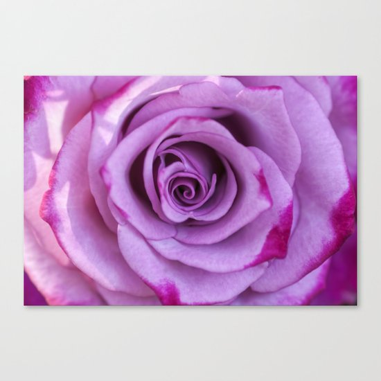 Heart of a rose I - Pink and purple Roses flowers Canvas Print