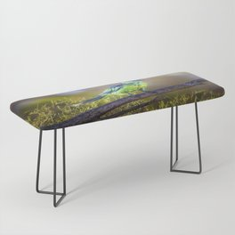 Mallee Ringneck Parrot Bench