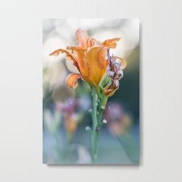 Back Lit Lily During Golden Hour With Bokeh Background Metal Print
