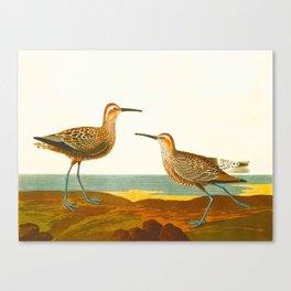 Long-legged Sandpiper Bird Canvas Print