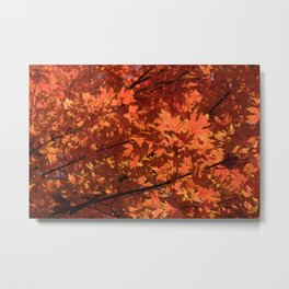 Fall Glow Metal Print