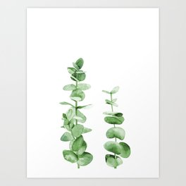 Eucalyptus leaves. Art Print