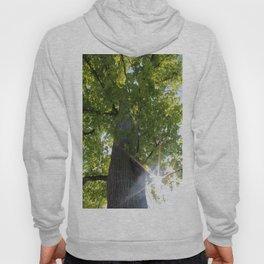 Peek-A-Boo Tree Hoody