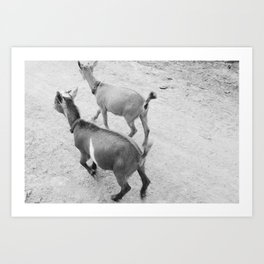 Pet Goats Art Print