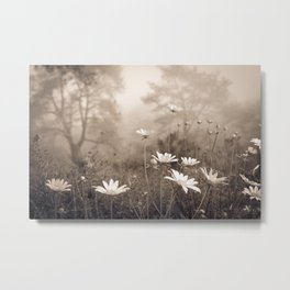 Daisies in the Fog, Guy Fleming Trail, Torrey Pines Metal Print