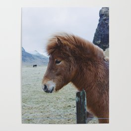 Brown Horse in Iceland Poster