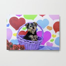 Yorkshire Terrier Puppy Smiling and Posing in a Purple Basket with Valentine's Day Heart Background Metal Print