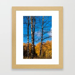 4 birches Framed Art Print