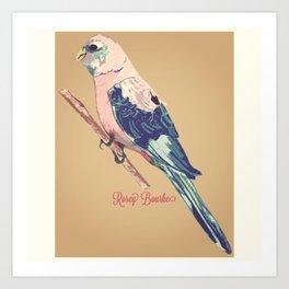 Rosey Bourke Parakeet Art Print