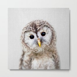 Baby Owl - Colorful Metal Print