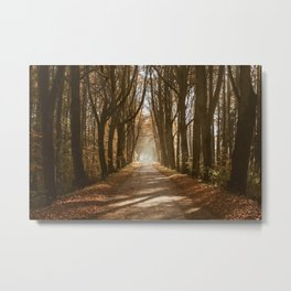 The Golden Autumn Path (Color) Metal Print