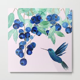 blueberry and humming bird Metal Print