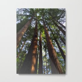 Trees! Henry Cowell State Park - California Metal Print