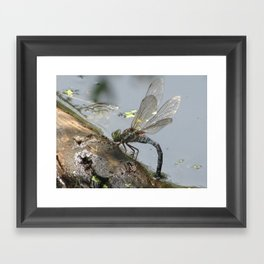 Mother-to-be 2 Framed Art Print
