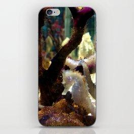 Seahorse iPhone Skin